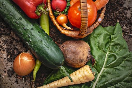 夏バテにおすすめの食べ物―薬膳の視点で夏食材を探そう―