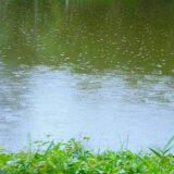 菜種梅雨の意味とは?季語で使える!菜種梅雨を別に言い換えると?